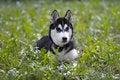 Free Dog Stock Photography - 9937582