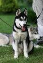 Free Dog Stock Photos - 9938443