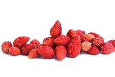 Free Wild  Strawberry Royalty Free Stock Images - 9930149