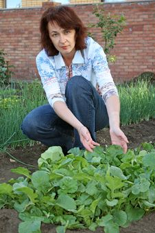 Free Bed With A Garden Radish Stock Photo - 9930860