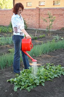 Free Having Watered Beds With A Radish Stock Photos - 9930893