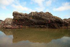Rock With Starfish Stock Photo