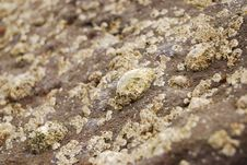 Limpets And Barnacles Royalty Free Stock Image