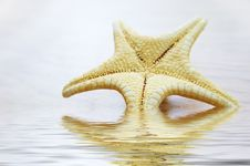 Free Sea Star Over Background Royalty Free Stock Photos - 9936718