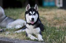 Free Dog Royalty Free Stock Photography - 9937637