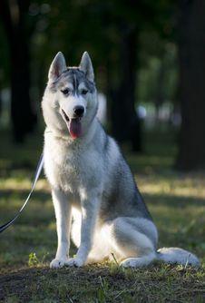Free Dog Stock Images - 9937654