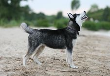 Free Dog Stock Photo - 9937670