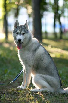 Free Dog Royalty Free Stock Images - 9937869