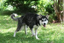 Free Dog Stock Images - 9938164