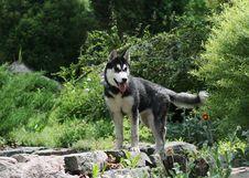 Free Dog Royalty Free Stock Photo - 9938205