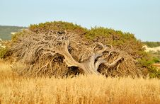 Free An Old Tree. Stock Image - 9939181