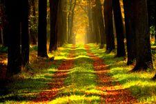 Free Nature, Forest, Woodland, Ecosystem Stock Image - 99300101