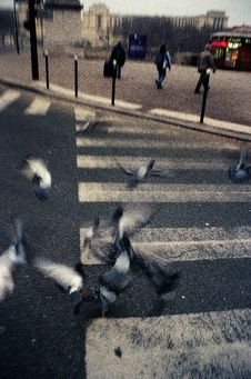 Free DOVES ON THE STREET OF PARIS Stock Images - 99338424