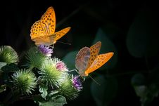 Free Butterfly, Moths And Butterflies, Insect, Brush Footed Butterfly Royalty Free Stock Photo - 99341685