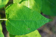 Free Leaf, Plant Pathology, Plant, Plant Stem Royalty Free Stock Image - 99349366