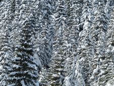 Free Tree, Winter, Frost, Woody Plant Royalty Free Stock Photo - 99358465