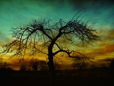 Free Sky, Tree, Nature, Woody Plant Stock Image - 99359561