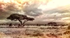 Free Sky, Ecosystem, Savanna, Tree Stock Image - 99359631