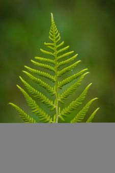 Free Plant, Leaf, Vegetation, Fern Stock Photo - 99361460