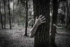 Free Tree, Nature, Photograph, Black Royalty Free Stock Image - 99366276