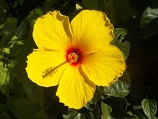 Free Flower, Yellow, Flowering Plant, Plant Royalty Free Stock Photo - 99370125