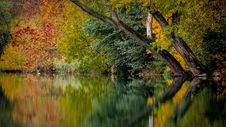 Free Reflection, Water, Nature, Leaf Royalty Free Stock Image - 99370326