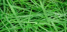 Free Grass, Plant, Moisture, Dew Royalty Free Stock Images - 99370819