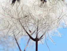 Free Branch, Winter, Tree, Twig Royalty Free Stock Photos - 99371368
