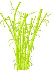 Free Bamboo Plantation Royalty Free Stock Photos - 9941948