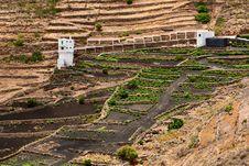 Free A Vineyard, Lanzarote. Royalty Free Stock Photo - 9943415