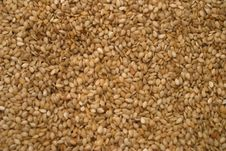 Free Seed Of Sesame Background Stock Photos - 9945113
