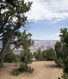 Free Trees Overlooking The Grand Canyon Royalty Free Stock Photos - 9945438