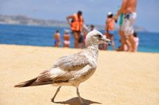 Free Bird On The Beach Royalty Free Stock Image - 9945476