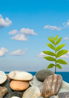 Free Shoot Of Tree Growing From Pebbles Royalty Free Stock Images - 9947109