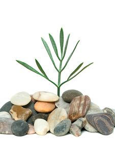 Free Shoot Of Tree Growing From Pebbles Royalty Free Stock Photos - 9947208