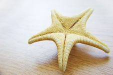 Free Sea Star Over Background Stock Images - 9948494