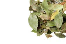 Free Laurel Leaves Stock Photography - 9949092