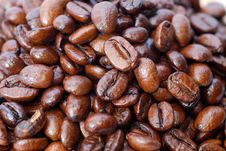 Free Fresh Coffee Bean Series 03 Royalty Free Stock Photo - 9949835