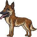 Free Dog Breeds: German Shepherd Stock Photo - 9959160