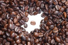 Free Fresh Coffee Bean Series 05 Stock Images - 9950194