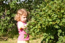 Free Little Girl Gathering Currants Royalty Free Stock Photo - 9951885