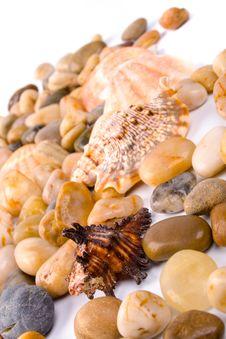 Free Sea Shells And Pebble Royalty Free Stock Photo - 9952845