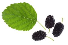 Mulberries And Green Leaf Stock Photography