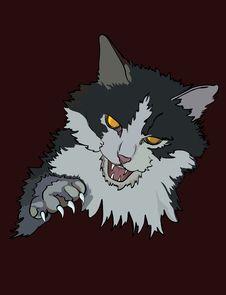 Free Enraged Cat Royalty Free Stock Images - 9953019