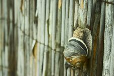 Snail With Cracked Shell Royalty Free Stock Photo