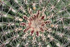 Free Barrel Cactus Macro Royalty Free Stock Image - 9956316