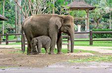 Free Elephant Son And Elephant Mom Stock Photos - 9956563