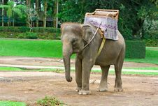 Free Elephant Stock Image - 9956571