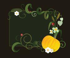 Pumpkin. Abstract Frame Stock Photos