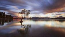 Free One Calm Tree. Stock Image - 99545781